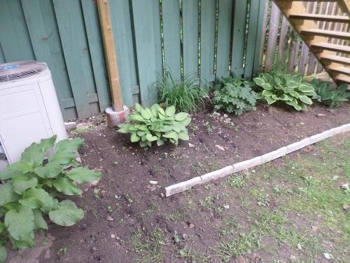 My garden, spring 2015