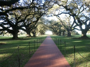 The beauty and the majesty of the mighty oaks in front of the Oak Alley Plantation