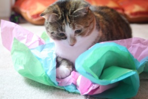 Cat and Tissue Paper