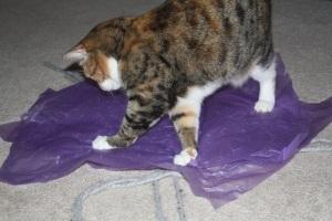 Tissue and Yarn