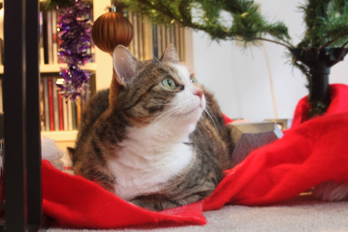 Keeping the Christmas Tree Vertical (in the Presence of a Curious ...